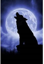 Schmidt  legpuzzel Full moon night - 500 stukjes